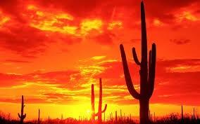 cactus-sunset-logo